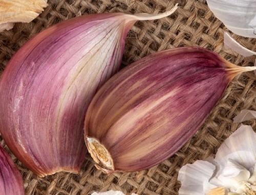 Garlic Close-up